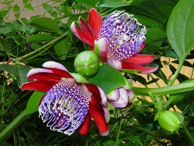 Купить редкие растения в москве, шаров